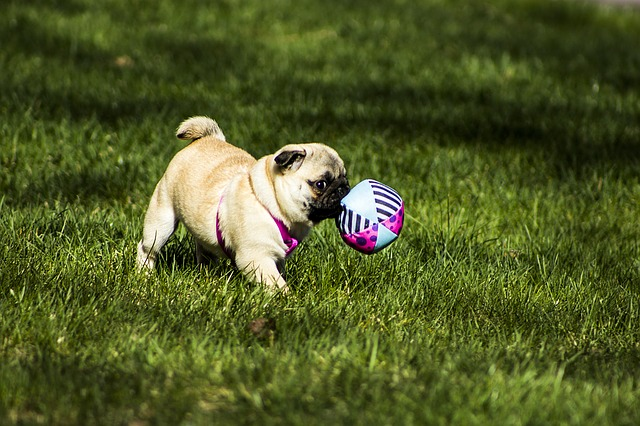 Best Gifts for Pug Lovers