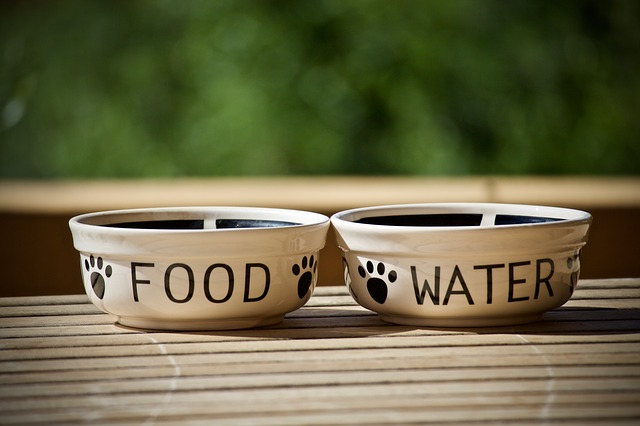 Best Bowls for Pugs