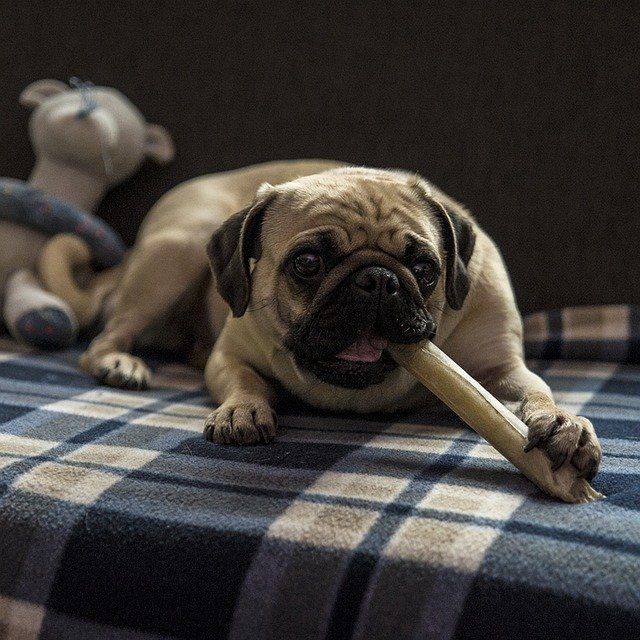 Best dog treats for pugs