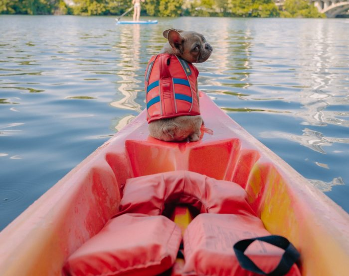 Best cooling vest pugs